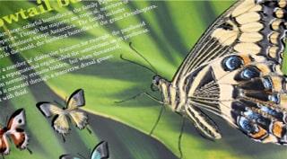 美しい蝶のDMはがき
