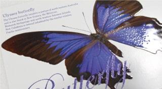 青い蝶のDMはがき